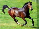 C:\Users\км\Pictures\Оля\картинки интернет\лошадь.jpg