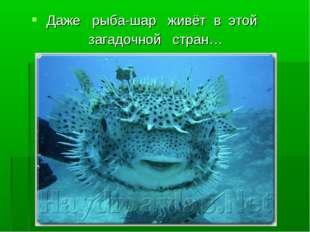 Даже рыба-шар живёт в этой загадочной стран…
