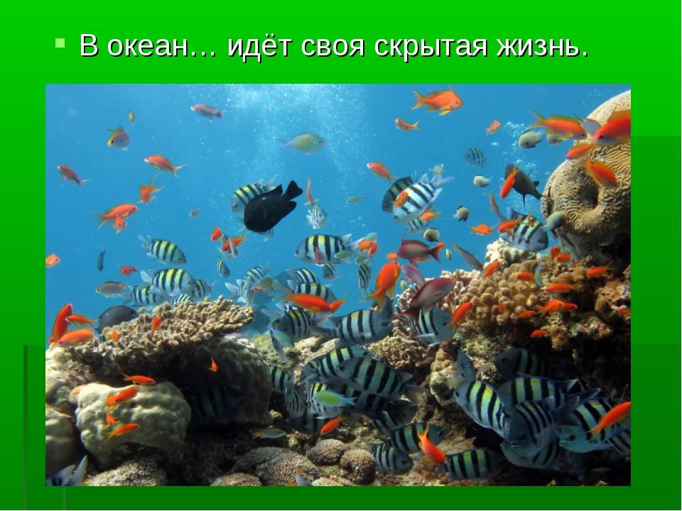 В океан… идёт своя скрытая жизнь.