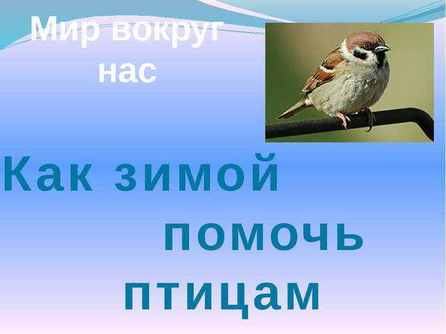 Мир вокруг нас Как зимой помочь птицам