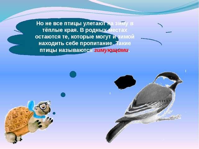 Но не все птицы улетают на зиму в тёплые края. В родных местах остаются те,...