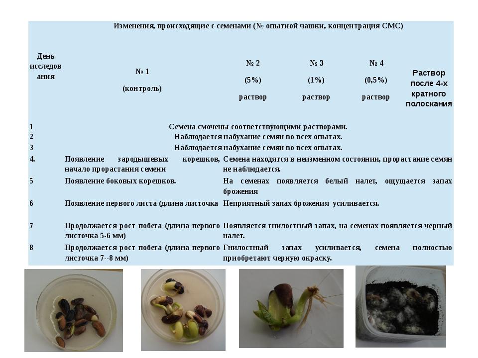 Деньисследования Изменения, происходящие с семенами (№ опытной чашки, концен...