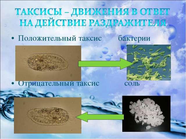 Положительный таксис бактерии Отрицательный таксис соль