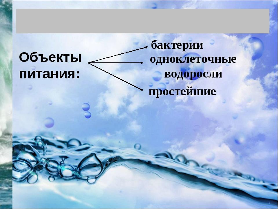 Объекты питания: бактерии одноклеточные водоросли простейшие