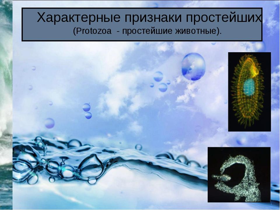 Характерные признаки простейших (Protozoa - простейшие животные).