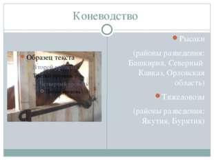 Коневодство Рысаки (районы разведения: Башкирия, Северный Кавказ, Орловская о