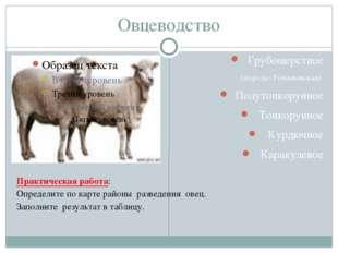 Овцеводство Грубошерстное (порода- Романовская) Полутонкорунное Тонкорунное К