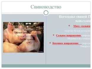 Свиноводство Поголовье свиней 17 млн.голов Мясо –сальное (порода-Белая русска