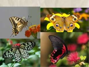 1.все бабочки – вредители. 