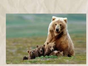 11. Медведь –неуклюжее животное 