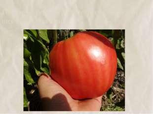 16. Чтобы помидоры быстрее покраснели в них вводят мочевину