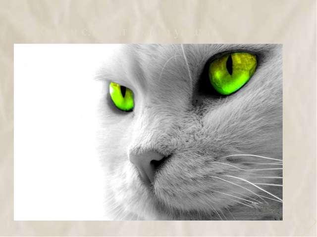 4. Кошки слышат только ушами 