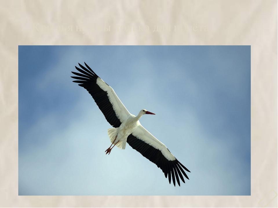 7. Крылья нужны только для полёта 
