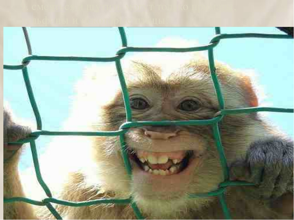 9. смеяться и шутить могут только приматы, дельфины и некоторые птицы. 