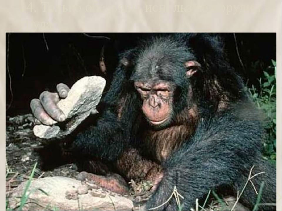 14. Только обезьяны используют орудия труда  