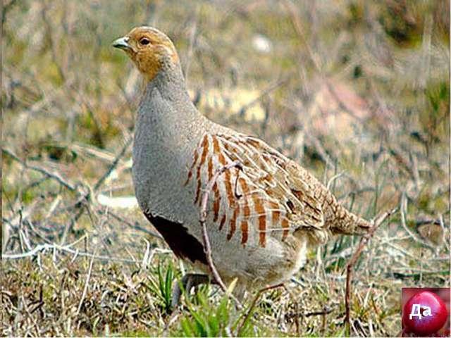 Охота - это сохранение животного мира, а не истребление Да