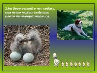 3.Не бери весной в лес собаку, она легко может поймать плохо летающих птенцов.