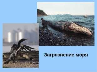 Загрязнение моря