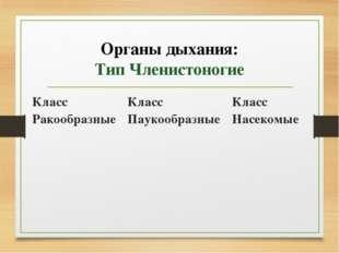 Органы дыхания: Тип Членистоногие Класс Ракообразные Класс Паукообразные Клас