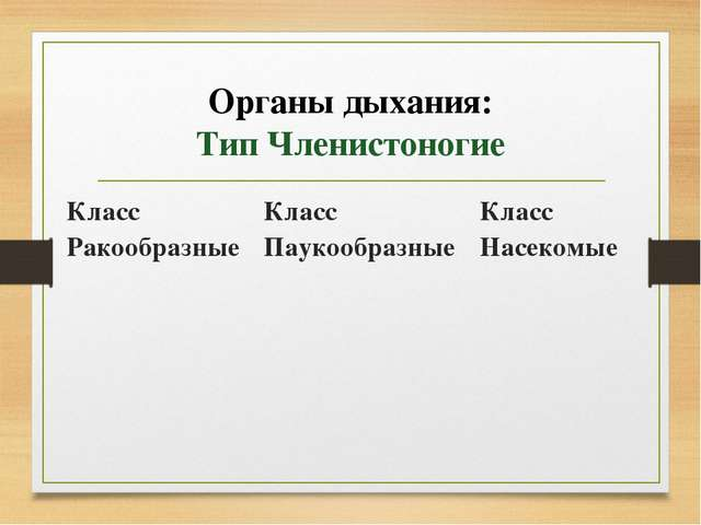 Органы дыхания: Тип Членистоногие Класс Ракообразные Класс Паукообразные Клас...