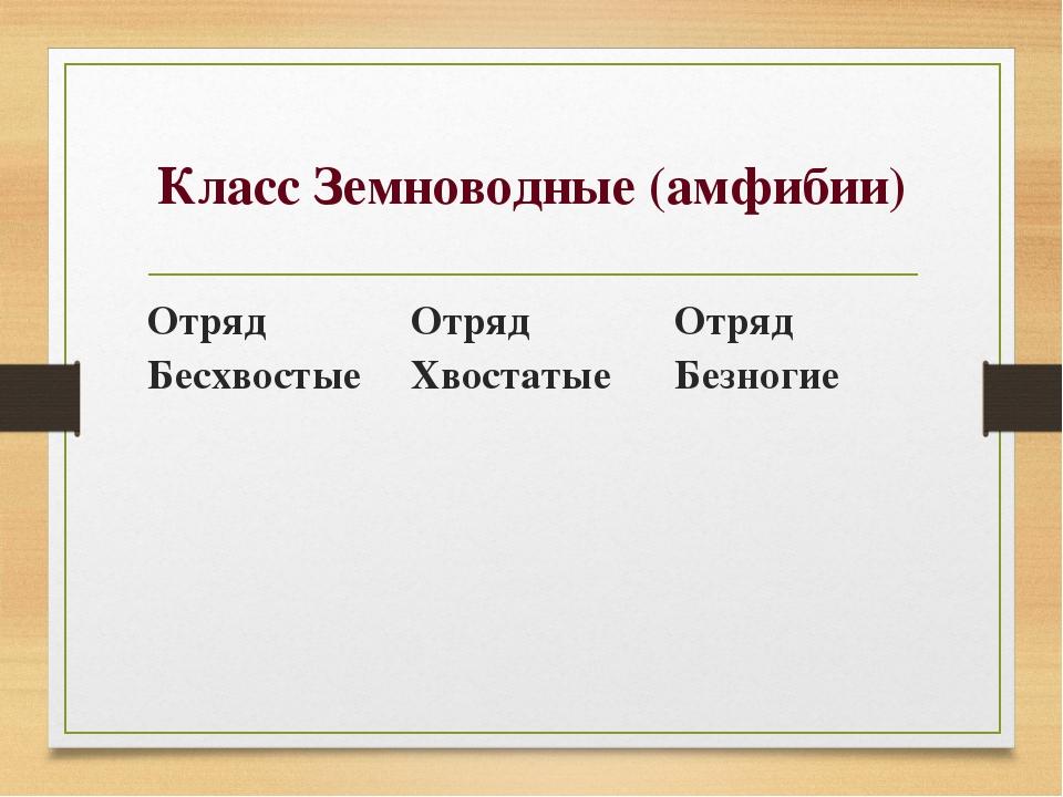Класс Земноводные (амфибии) Отряд Бесхвостые Отряд Хвостатые Отряд Безногие