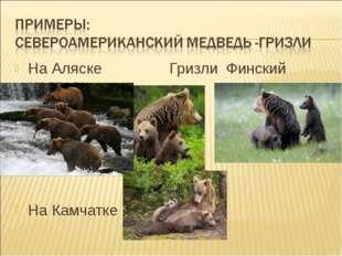 На Аляске Гризли Финский медведь На Камчатке