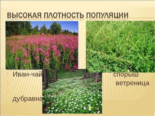 Иван-чай спорыш ветреница дубравная