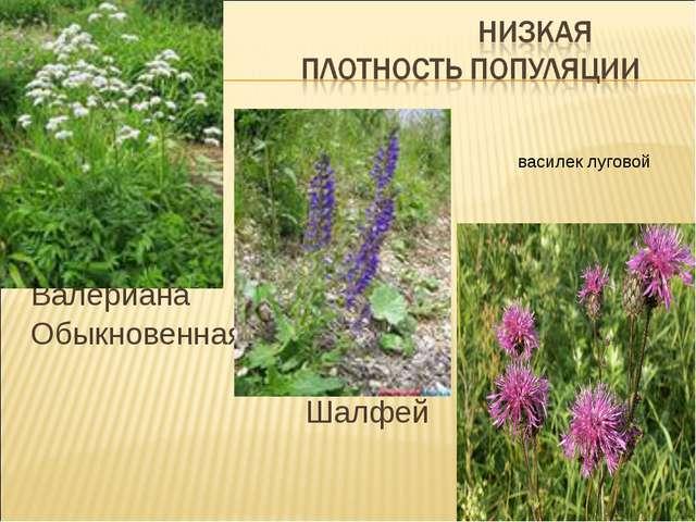 Валериана Обыкновенная Шалфей василек луговой