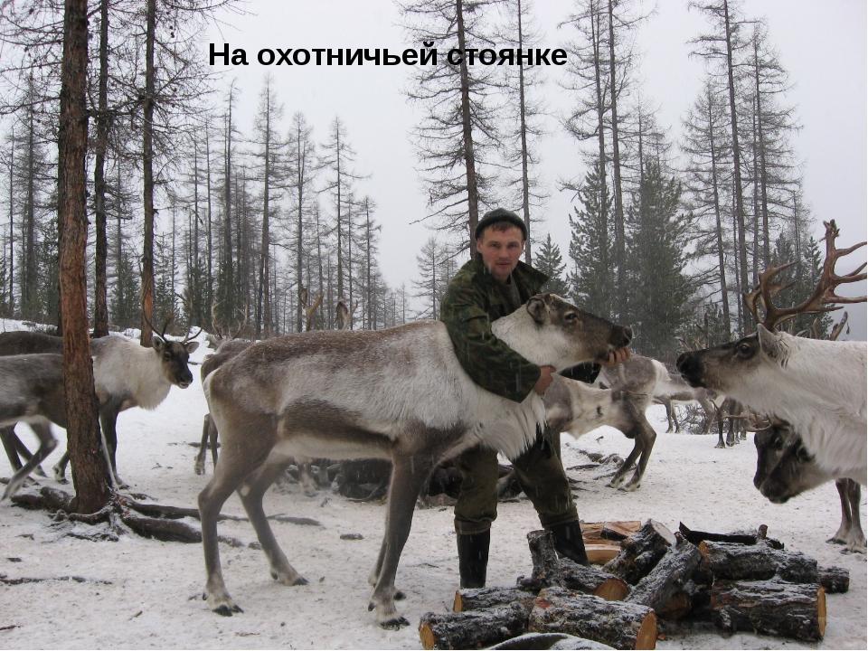 На охотничьей стоянке