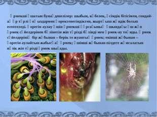 Өрмекші ұшатын бунақденелілер: шыбын, көбелек, өсімдік бітісімен, сондай-ақ