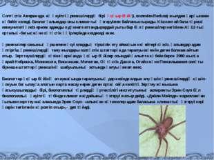 Солтүстік Америкада ең қауіпті өрмекшілердің бірі қоңыр бүйі (Loxosceles R