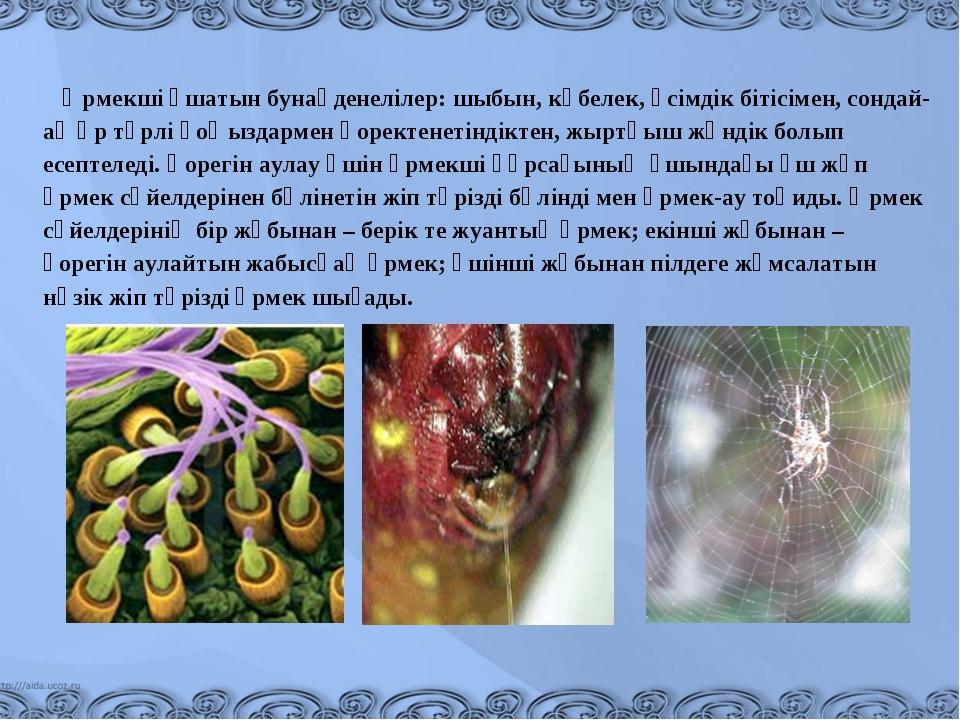 Өрмекші ұшатын бунақденелілер: шыбын, көбелек, өсімдік бітісімен, сондай-ақ...