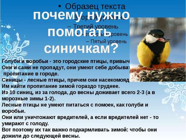почему нужно помогать синичкам? Голуби и воробьи - это городские птицы, прив...