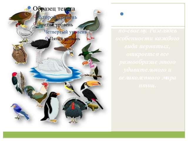 Каждая птица интересна и прекрасна по-своему. Разглядев особенности каждого...
