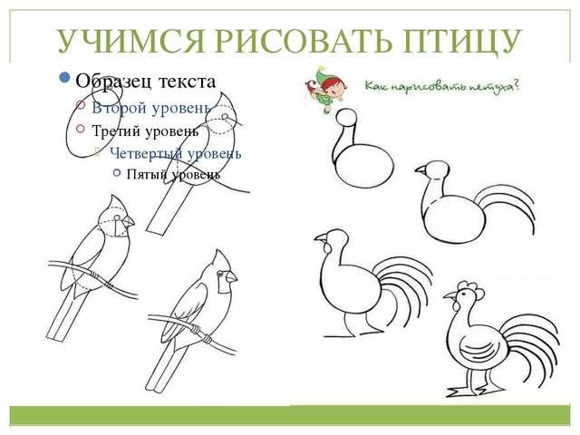 Учись рисовать птицу