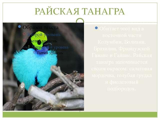 РАЙСКАЯ ТАНАГРА Обитает этот вид в восточной части Колумбии, Боливии, Бразили...