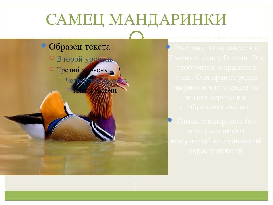 САМЕЦ МАНДАРИНКИ Этот вид птиц занесен в Красную книгу России. Это необычные...