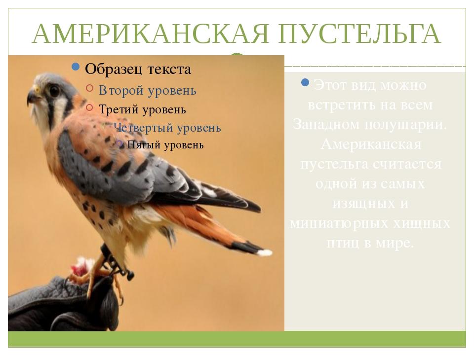 АМЕРИКАНСКАЯ ПУСТЕЛЬГА Этот вид можно встретить на всем Западном полушарии. А...