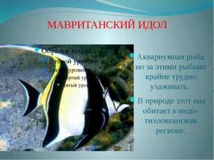 МАВРИТАНСКИЙ ИДОЛ Аквариумная рыба, но за этими рыбами крайне трудно ухаживат