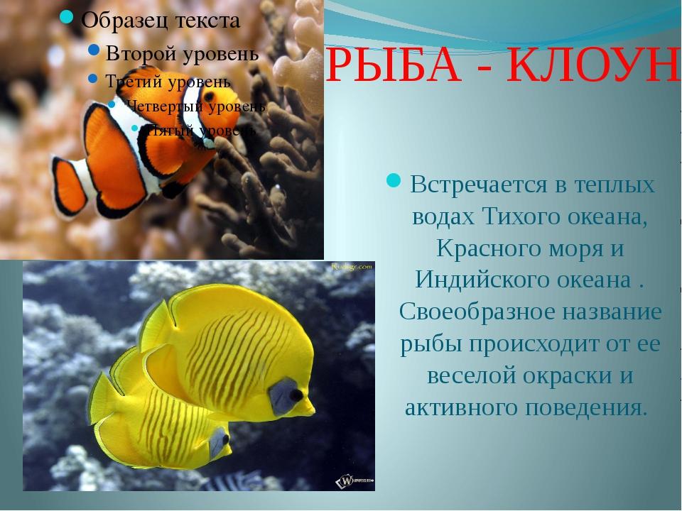 Рыба-клоун почему так называется