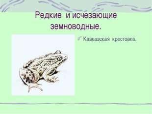 Редкие и исчезающие земноводные. Кавказская крестовка.