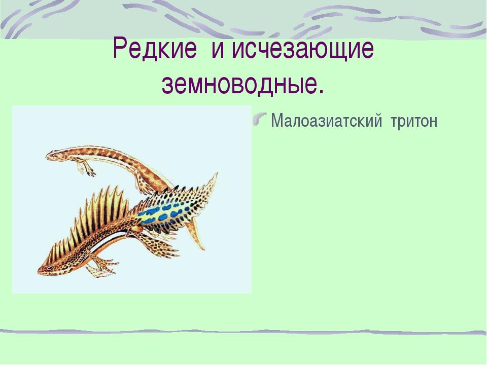 Редкие и исчезающие земноводные. Малоазиатский тритон