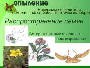 Насекомые-опылители (шмели, пчёлы, бабочки, птичка колибри) Распространение с
