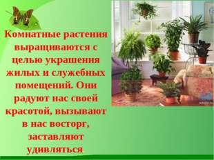 Комнатные растения выращиваются с целью украшения жилых и служебных помещени