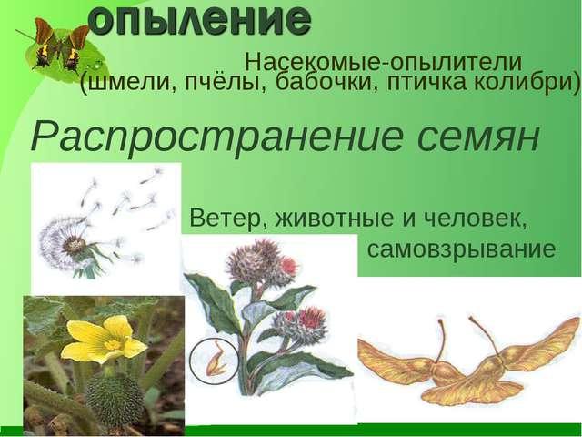 Насекомые-опылители (шмели, пчёлы, бабочки, птичка колибри) Распространение с...