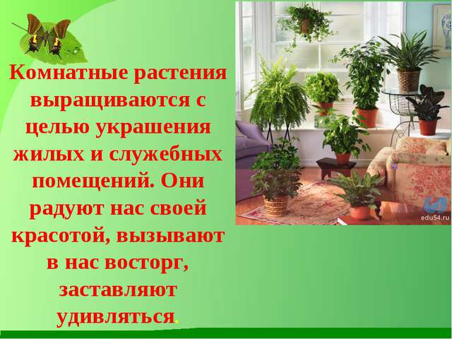 Комнатные растения выращиваются с целью украшения жилых и служебных помещени...