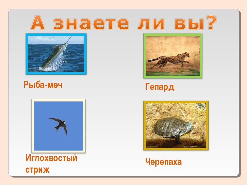 Рыба-меч Гепард Иглохвостый стриж Черепаха