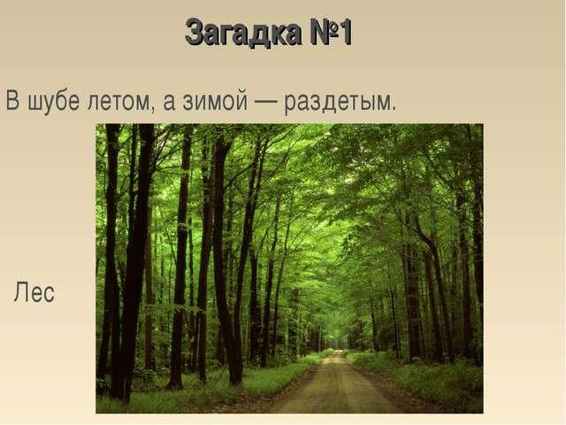 В шубе летом, а зимой — раздетым. Лес Загадка №1
