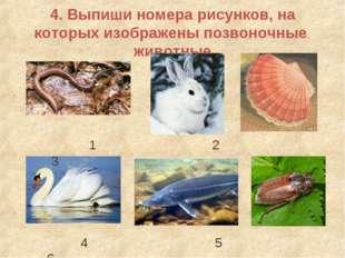 4. Выпиши номера рисунков, на которых изображены позвоночные животные 1 2 3 4