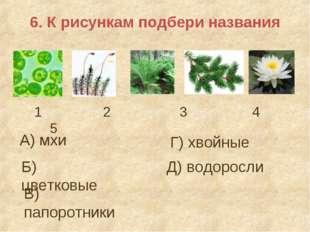 6. К рисункам подбери названия А) мхи Б) цветковые 1 2 3 4 5 В) папоротники Г